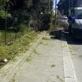 Verde pubblico, al via la manutenzione