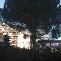 'Il maestoso pino di via Bitritto non va abbattuto'