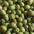 Bitonto, furto di olive: vittima un modugnese
