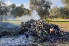 Lotta all'abbandono rifiuti, dalla Regione finanziamenti per Modugno