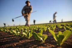 Economia agricola e turismo rurale, Modugno nel Gal Nuovo Fior d'Olivi