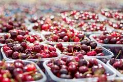 Raccolta delle ciliegie in Puglia, via con dieci giorni di ritardo