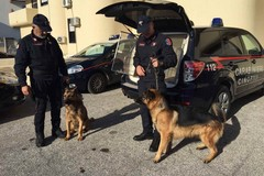"""Bari, sequestrate armi e droga grazie al """"fiuto"""" delle unità cinofile di Modugno"""