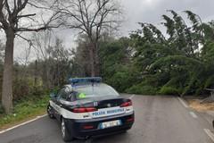 Crolla un albero per il forte vento, chiusa la Bari-Modugno