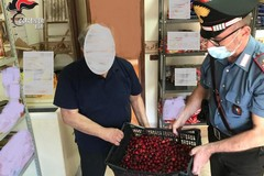 Modugno, vendevano abusivamente frutta e verdura: due sanzioni al mercato coperto