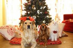 Modugno, per Natale adotta un cane anziano. Ecco l'iniziativa del Comune