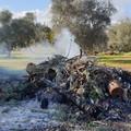 Incendio di rifiuti in un terreno, quattro persone denunciate