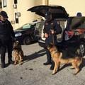 """Bari, sequestrate armi e droga grazie al  """"fiuto """" delle unità cinofile di Modugno"""