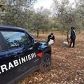 Tentato furto di olive, denunciati in due a Toritto