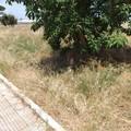 Riqualificazione delle aree verdi, la Lega Modugno scrive al sindaco