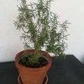 Festa dell'albero, una pianta dall'amministrazione comunale
