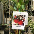 La Vito Faenza festeggia gli alberi con Legambiente
