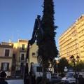 Ecco l'albero di Natale: il conto alla rovescia è cominciato