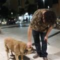 Bella, per la cagnolina di quartiere una piazzetta?