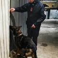 Controlli a tappeto a Modugno, due arresti per droga