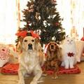 Anpana Modugno: «A Natale non regaliamo cani, non sono giocattoli»