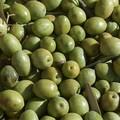 In aumento i furti di olive