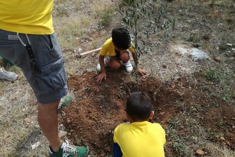 I bambini piantano un albero a Modugno
